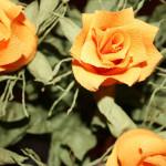 kwiaty (34)